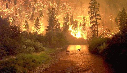 incendio verano 2012 valencia erostrato incendiarios