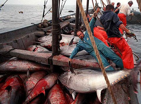 pesca de atún mercurio